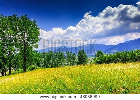 Large Meadow With Herbs,  Trees, Shrubs And Clouds Over The Mountains On A Nice Summer Day