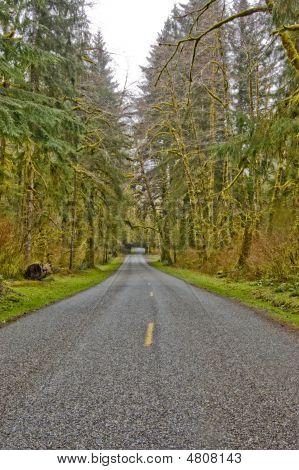 Driving Through Hoh Rain Forest