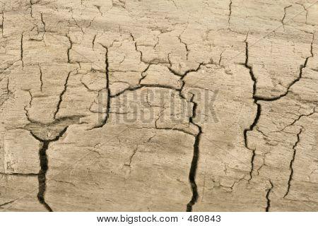 Dry Skin (wood)