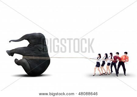 Business Teamwork Pulling Elephant Together - Isolated