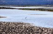 View of heron in the Salt evaporation ponds in Secovlje Slovenia poster