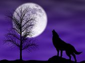 Howling wolf in a dark and cloudy night with moon poster