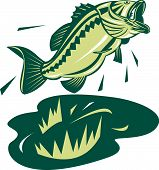 Vector art illustration of a largemouth bass isolated on white background poster