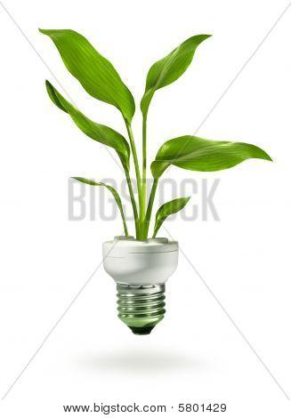Crecimiento verde de Eco lámpara ahorradora de energía