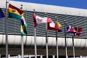 photography of international flags in Miami Airport poster