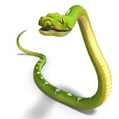 3D rendering of a green tree python with clipping path and shadow over white poster