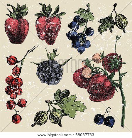 Hand dawn berries in vintage style