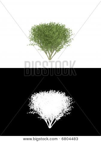 3d render bush isolated on white background