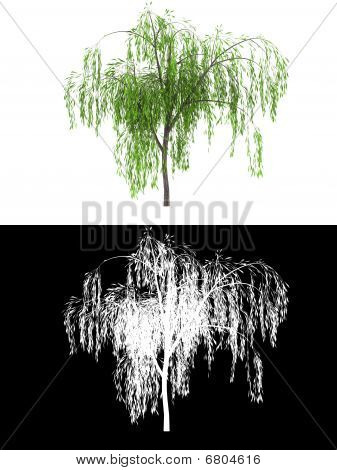 new wipping willow tree