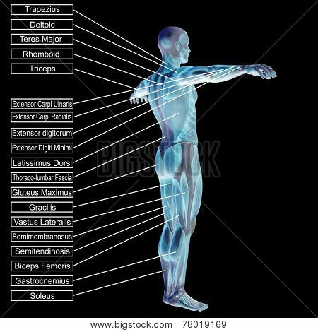 Concept or conceptual 3D male or human anatomy, a man with muscles and text isolated on black background