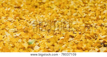 Carpet of leaves of birch