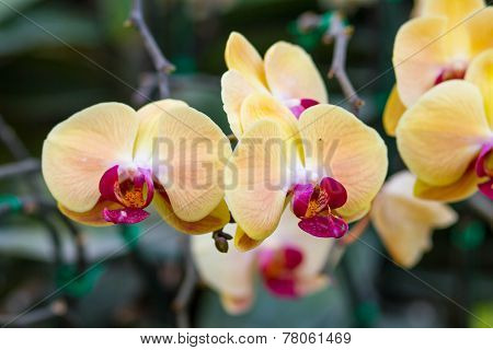 orchid flower with buds background - beauty in nature