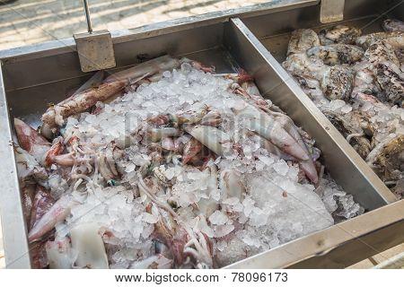 Fresh Sea Squid For Sale On Greek Island Kalymnos