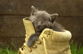 Sleepy Kitten 1