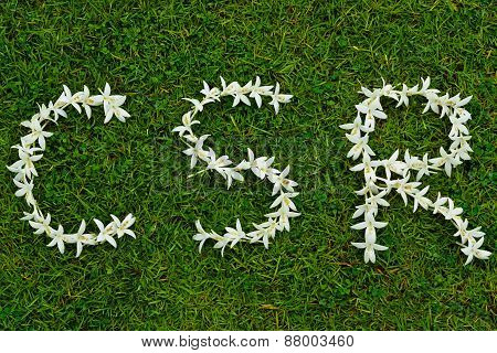 white flowers arranged in CSR shape on grass