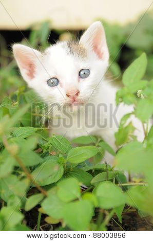 Baby kitten among the green grass