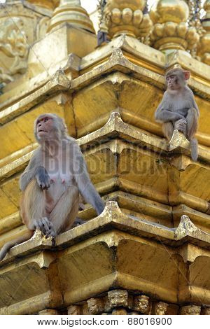 Two Macaques On Top Of Chorten In Swayambhunath, Kathmandu, Nepal