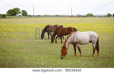 Farmland horses