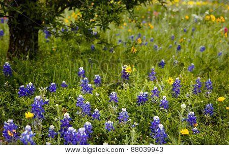 Texas style background
