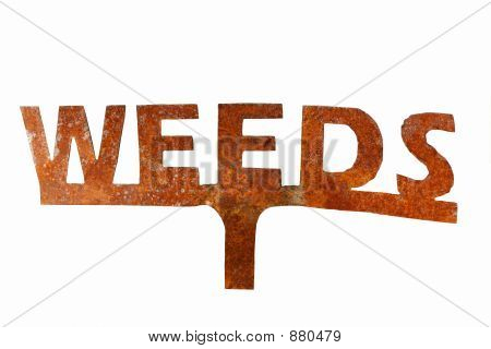 Isolated Weeds