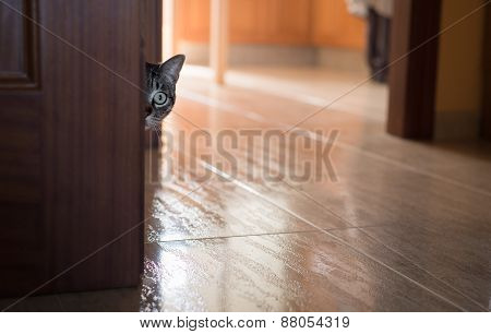 Cat Hidden Behind A Door