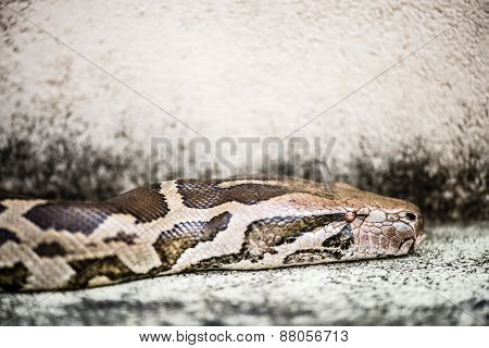 Python Snake Is Just A The Sneaking Serpent