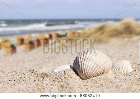 Seashell And Beach Chairs Baltic Sea