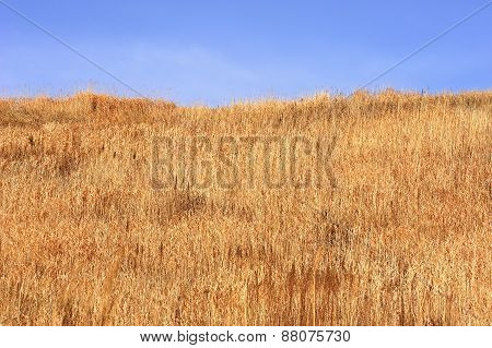 Background Of Dry Field