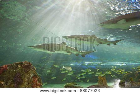 Ripleys Aquarium Canada shark tank