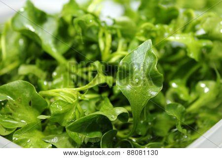 Fresh Watercress