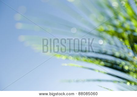 Defocused Cycad Frond Light Catching On Dew Drops
