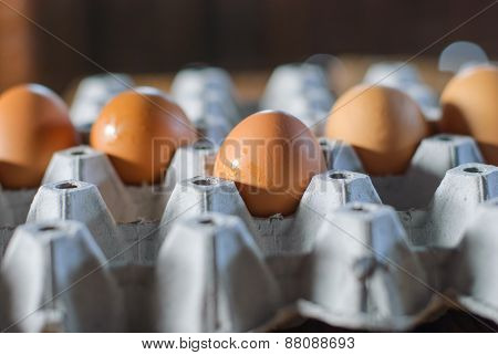 Fresh Eggs In Egg Box