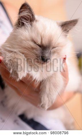 Woman holding cute little kitten close up