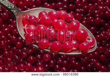 Red Currant In A Spoon.
