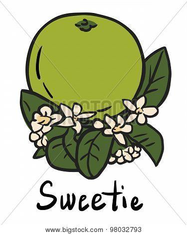 Sweetie fruit