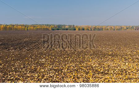 Fall season on agricultural fields