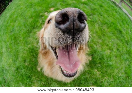 Dogs Mouth Close Up With Eyes Open