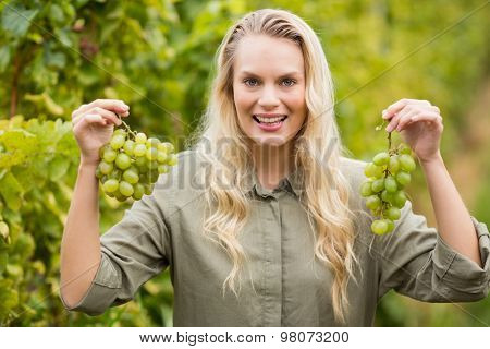 Portrait of a smiling blonde winegrower holding grapes