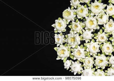 Lotus Flowers On Black Background