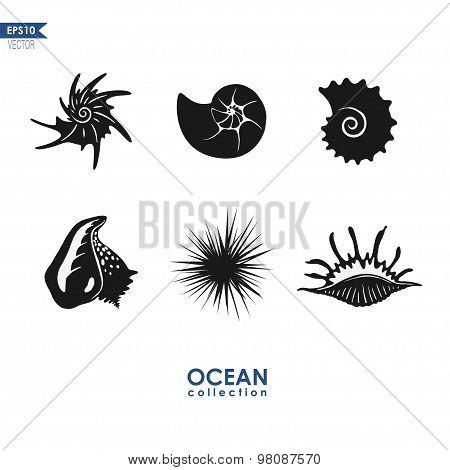 ocean creatures: sea snails, shells, mollusks