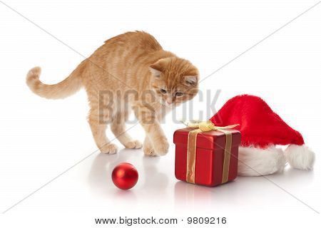 Little kitten gift box and headdress of santa claus on a white background. poster