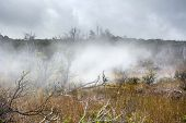 Natural steam rising from volcanic steam vents in the earth at Volcano National Park, Kilauea Hawaii. poster