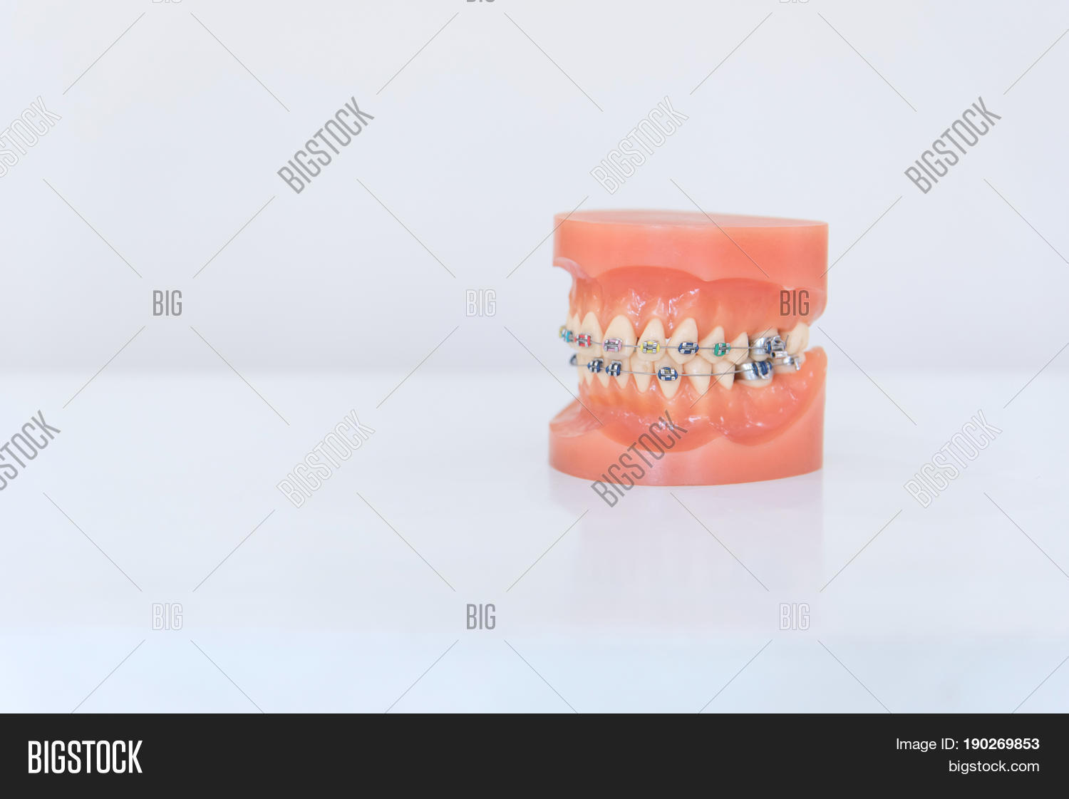Artificial Model Human Jaw Wire Image & Photo | Bigstock