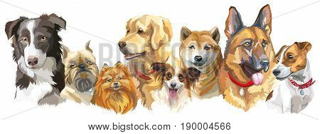 Set of colorful vector portraits of different dog breeds (brussels griffon Shiba Inu Pomeranian Border collie German shepherd Golden retriever Jack Russel terrier) isolated on white background