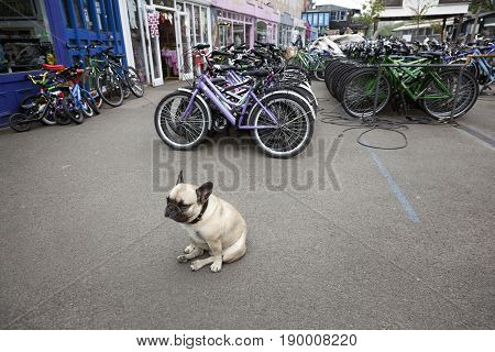 London United Kingdom 6 may 2017: bulldog in area called The Wharf full of small shops and cafe's on london southbank with rental bikes