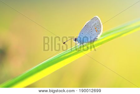 closeup of a butterfly outdoor (polyommatus icarus)