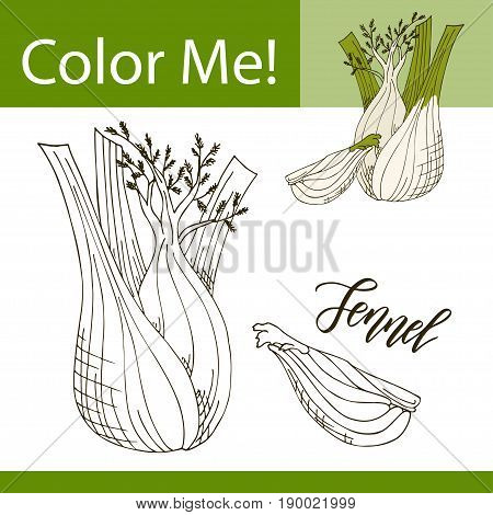 Education coloring page with vegetable. Hand drawn vector illustration of fennel