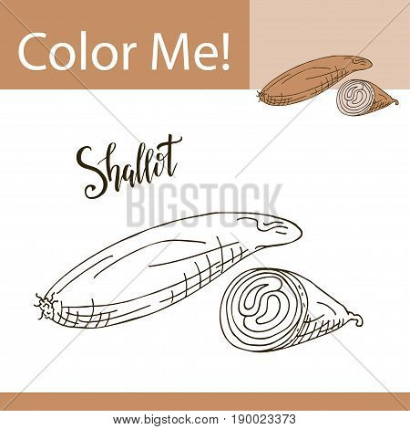 Education coloring page with vegetable. Hand drawn vector illustration of shallot