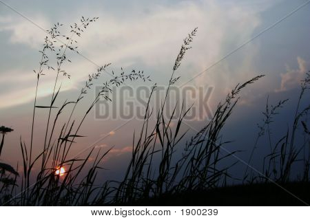 Grass Sun Silouhette