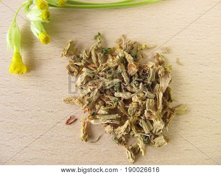 Oxlip flowers, Primulae flos, for herbal medicine